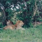 Massai Mara natural inhabitants
