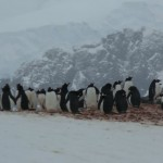 The Penguin Colony