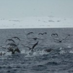 Penguines are flying on the ocean