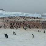 Residents of Antarctica always welcomes explorer
