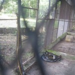 Anaconda at Georgetown Zoo